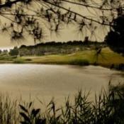 Citrus  Golf Club, Tunisia
