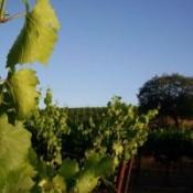 wijngaard2