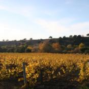 wijnveld